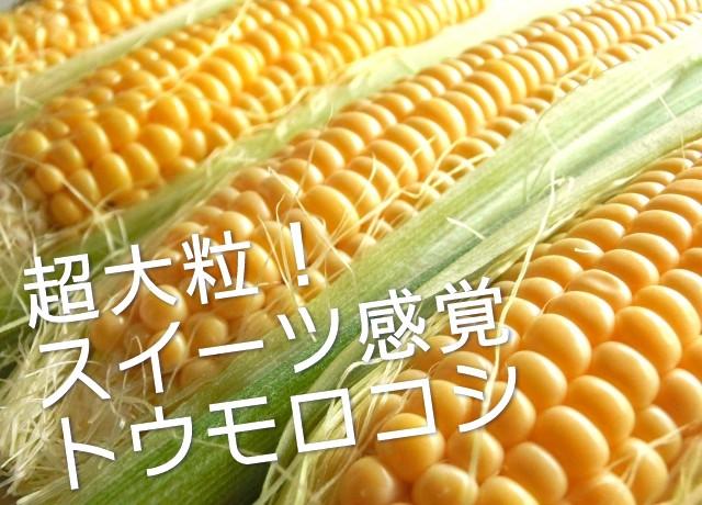 スイーツ感覚トウモロコシ