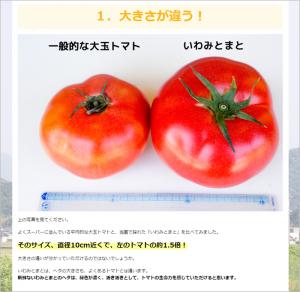 トマトのうまみや大きさを紹介