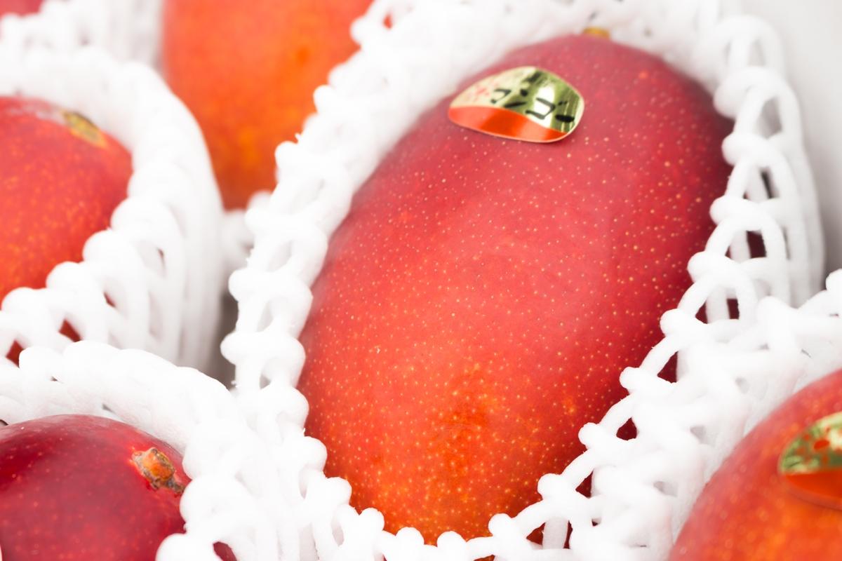 お客さんに、確実に美味しいマンゴーを届けられるように
