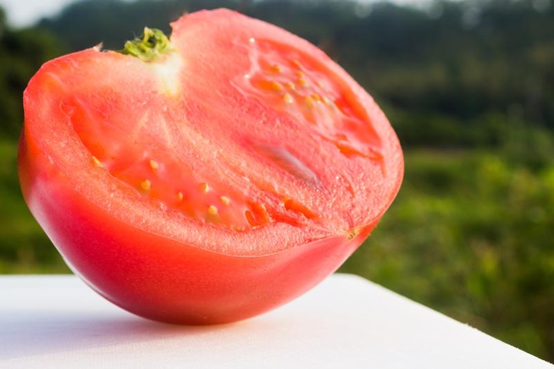 川西さんのトマト