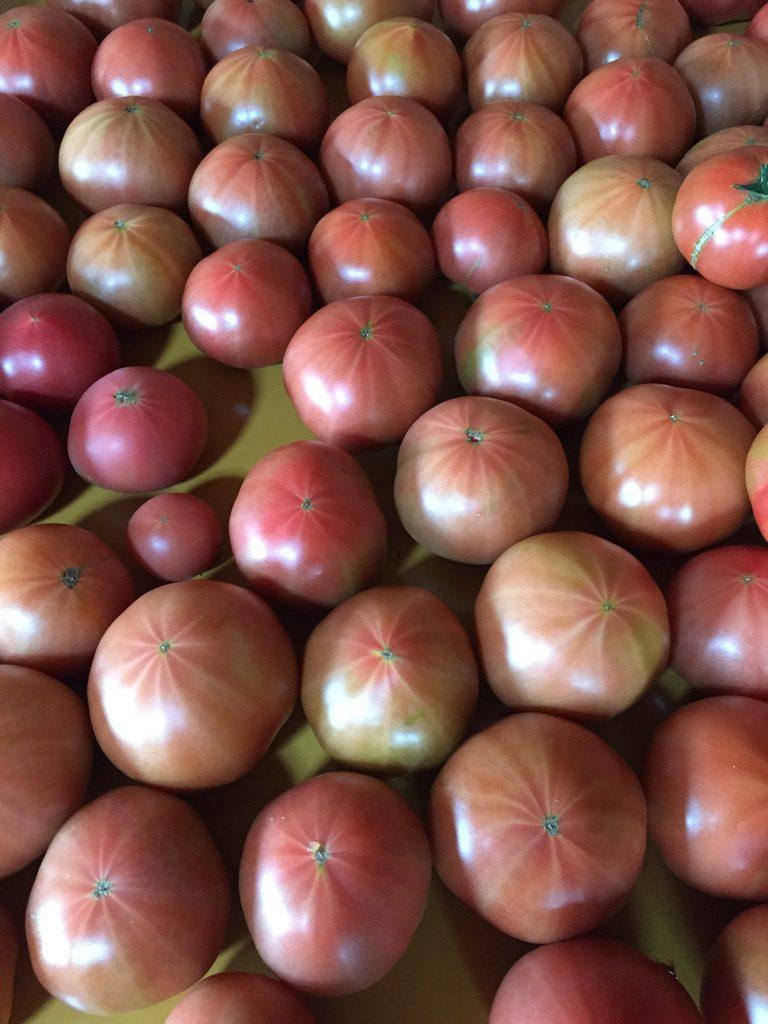 スターマークトマト