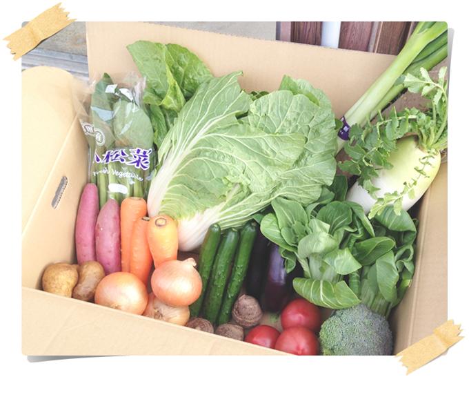 旬の野菜を段ボールいっぱいに詰め合わせます